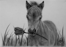 Little foal graphite by Odette1994