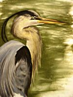 Great Blue Heron by blue1836