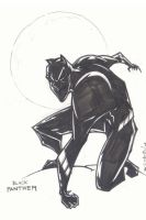 black panther by the-tracer