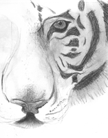 grown tiger unfinished by unihope