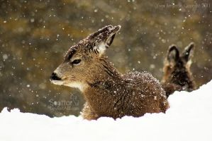 Let It Snow by Sagittor