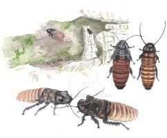 Ode to the Hissing Roach -watercolor- by shuufly