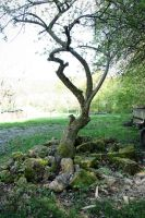 Wonky Tree by NHuval-stock