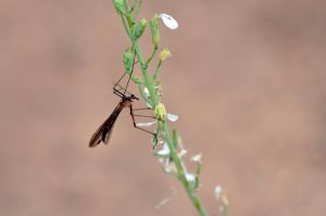 Scorpionfly by A-Sped-Kid
