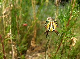 Garden spider not in garden by n3storm