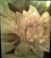 Water Lily by writerartist2896