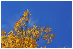 colors of autumn by Iulian-dA-gallery