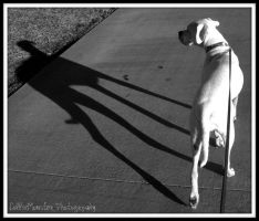 Everything is Black and White by colliemonster