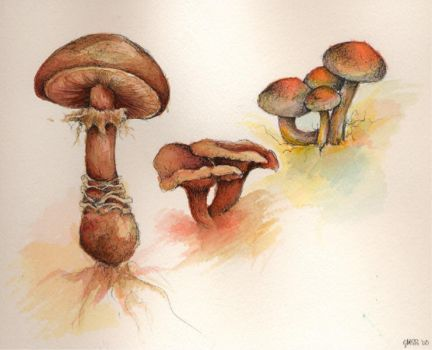 Three Mushrooms by Catipher
