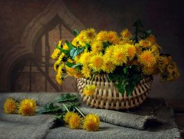 Still life with dandelions by Daykiney