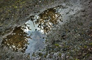 Puddle by Mackingster