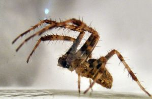 Attacking Spider 01 by Limited-Vision-Stock