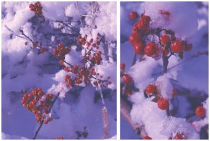 Snowberries 2 by PatchworkPearl