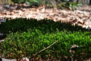 Mosses by CaryAndFrankArts