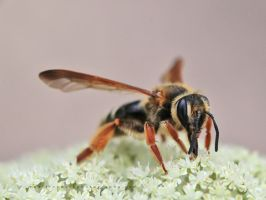 Bee 02 by andras120