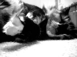 My cat by musicismylife2010