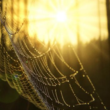 morning web by Iridescent-happinesS