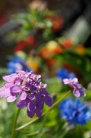 untitled flwers by Advantages