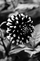 B + W Flower 06 by 1rainmaker