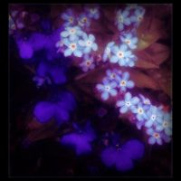 I Love Blue Flowers by Forestina-Fotos