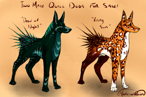 Two Short-Quilled, Male Quill Dogs for Sale! by MischievousRaven