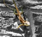 Lizard on Black by pantherwitch4982