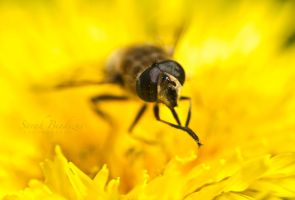 Busy Bee. by Blueberryblack