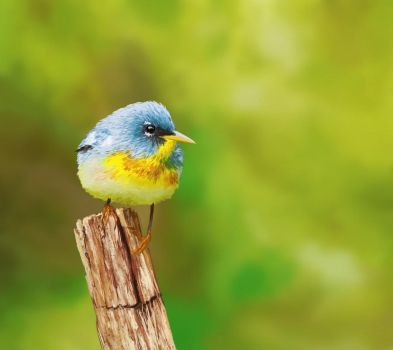 Northern Parula  sn by KosArtworks