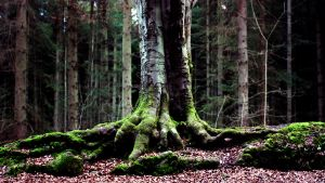 Roots by FlippinPhil