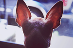 Tiny Guard Dog by brittiefacex3