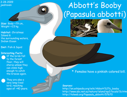 Abbott's Booby Reference by WildLifeWarriors
