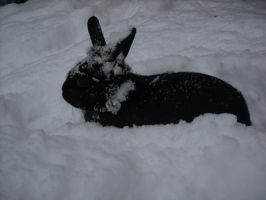 Rabbit in the Snow by Lucinda-Emma