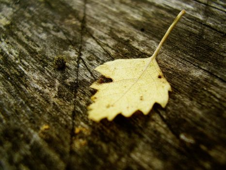 Tiny Little Leaf by TriinErg
