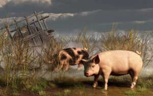 Pigs After A Storm by deskridge