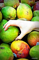 Choosing a ripe one by zumbaqueen