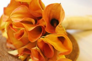 mango calla lilies by moonberry
