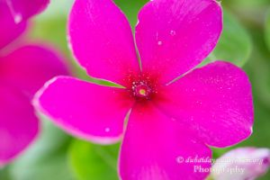 Pretty pink flower by jeans05
