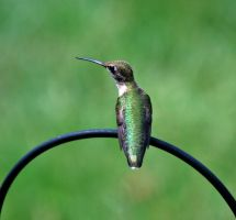 Hummingbird Rest by jennalynnrichards