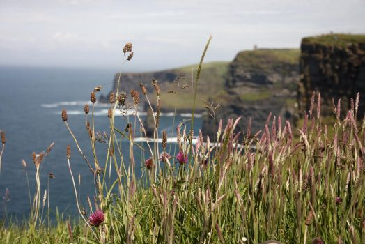 Cliffs of Moher by fairydust76