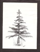 drawings by terri-stipple tree by cagdon