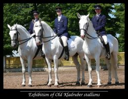 Exhibition of Kladruber stud by sarming
