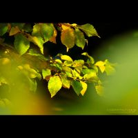 colors of autumn by thestargazer23