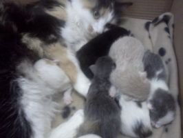 Foster Kittens 1 day old by RakshaWw
