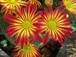 Pretty Mums 1 by aragornsparrow