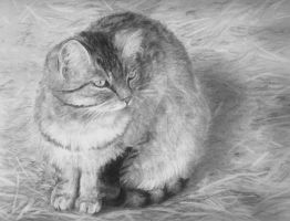 Barn cat study by mvisserio4