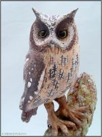 Horned Owl Sculpture - closeup by StephaniePride