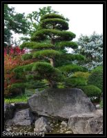 Japanese tree by joergens-mi