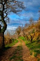 the little orchards by InsidePumpkinHead