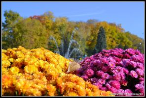 autumn flowers by Iulian-dA-gallery