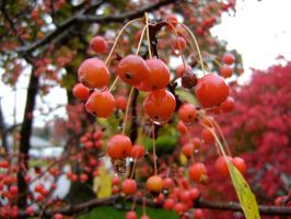 Crabapples 3 by NetherStray